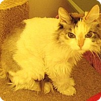 Adopt A Pet :: Newman - no risk - tiny - Scottsdale, AZ