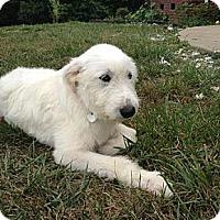 Adopt A Pet :: Delilah - Foster, RI
