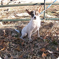 Adopt A Pet :: Buddy - PENDING ADOPTION - Braintree, MA