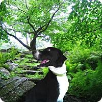 Adopt A Pet :: Max- Needs Help ASAP - Houston, TX