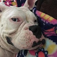 Adopt A Pet :: Meecie - Austin, TX