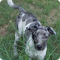 Adopt A Pet :: Cajun - Ball Ground, GA