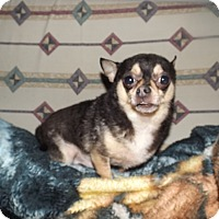 Adopt A Pet :: Shylo - Quincy, IN