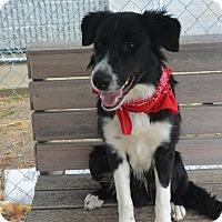 Adopt A Pet :: Banjo - Meridian, ID