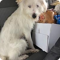 Adopt A Pet :: Catori - Las Vegas, NV