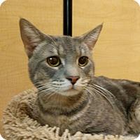 Adopt A Pet :: TIGER2 - Mesa, AZ