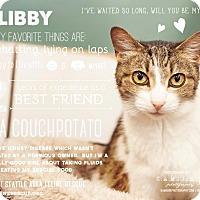 Adopt A Pet :: Libby - Shoreline, WA