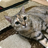 Adopt A Pet :: Hera - Milwaukee, WI