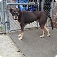 Adopt A Pet :: Nitro - Burlington, NC