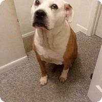 Adopt A Pet :: Dakota (COURTESY POST) - Baltimore, MD