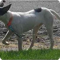 Adopt A Pet :: Miah - Toronto/Etobicoke/GTA, ON