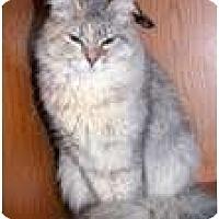 Adopt A Pet :: Alayne - Arlington, VA
