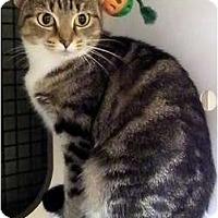 Adopt A Pet :: Maybeline - Alexandria, VA
