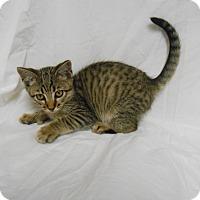 Adopt A Pet :: Yoda - Maywood, NJ