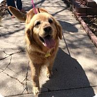 Adopt A Pet :: Kate - Denver, CO