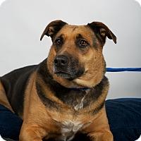 Adopt A Pet :: Lexi - Nuevo, CA