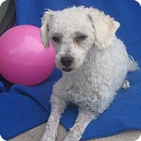 Adopt A Pet :: Fiona-WATCH MY VIDEO!!! - Irvine, CA