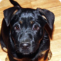 Adopt A Pet :: Abby - in Maine - kennebunkport, ME