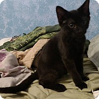 Adopt A Pet :: Forman - Stafford, VA