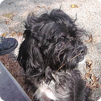 Adopt A Pet :: Peasley - Muskegon, MI