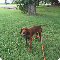 Adopt A Pet :: Hank - Foster Needed - kennebunkport, ME
