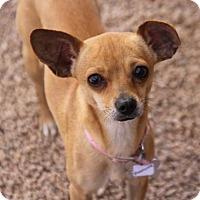 Adopt A Pet :: Roseanne - Phoenix, AZ