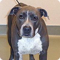 Adopt A Pet :: Kali - Wildomar, CA