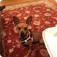 Adopt A Pet :: Minnie - Hockessin, DE