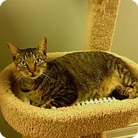 Adopt A Pet :: Briar - Lake Charles, LA