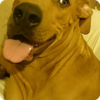 Adopt A Pet :: Sidie - Santa Monica, CA