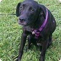 Adopt A Pet :: Whitney - Manhasset, NY