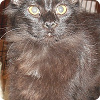 Adopt A Pet :: Endia - Chattanooga, TN