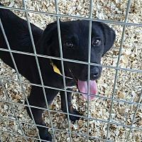 Adopt A Pet :: Isabelle - Livingston Parish, LA