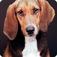 Adopt A Pet :: Celia - Newland, NC