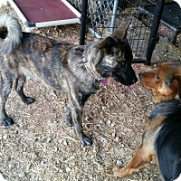 Adopt A Pet :: LoJack - Crocker, MO