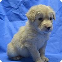 Adopt A Pet :: Sunshine Yellow (Colored Pencil Crew) - Alexandria, VA