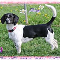 Adopt A Pet :: Tammy - Shippenville, PA