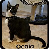 Adopt A Pet :: Ocala (MRM) 7.16.16 - Orlando, FL