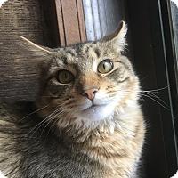 Adopt A Pet :: Sir Mikey - Aurora, IL