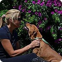 Adopt A Pet :: Jani - Eustis, FL