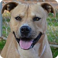 Adopt A Pet :: Hap - Athens, GA