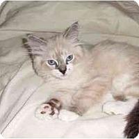 Adopt A Pet :: Tom - Portland, OR