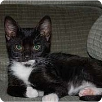 Adopt A Pet :: Hunter - Chula Vista, CA