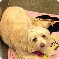 Adopt A Pet :: Macy - Lancaster, OH