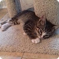 Adopt A Pet :: Squirrel - McDonough, GA