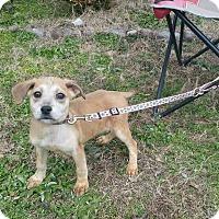 Adopt A Pet :: Sally - Arlington, TN