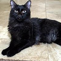 Adopt A Pet :: Monty - Chandler, AZ