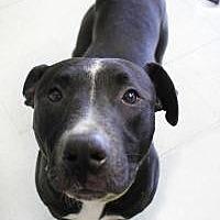 Adopt A Pet :: Rex - Yukon, OK