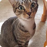 Adopt A Pet :: Cloie - Hazel Park, MI