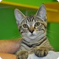 Adopt A Pet :: Charlie - Suwanee, GA